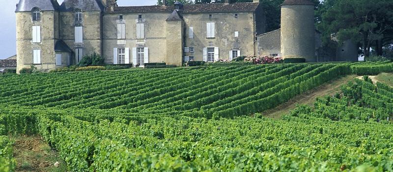 Château Yquem, Sauternes. Vignoble de Bordeaux, Gironde (33).